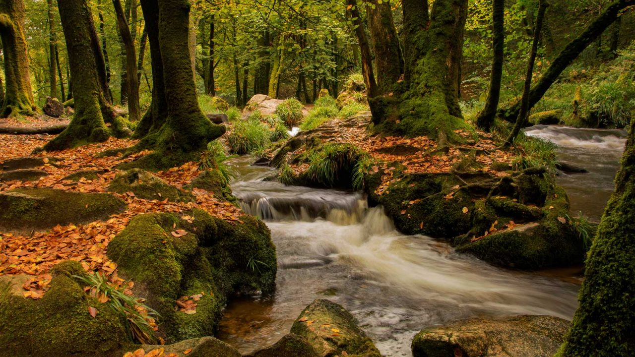 Cornish woodland with a stream.