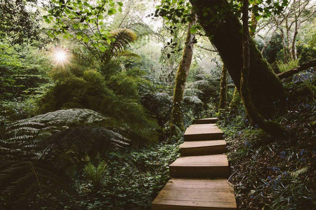 Tremenheere Sculpture Gardens woodland with stairs